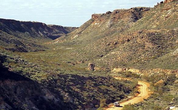Растительный мир региона карнарвон