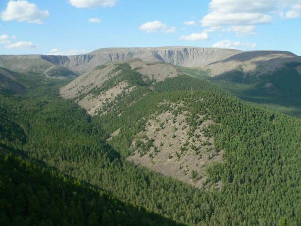 Даурия хэнтейская гора сохондо 2500 м н