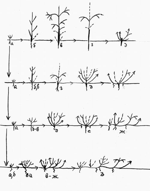 жизненных форм растений