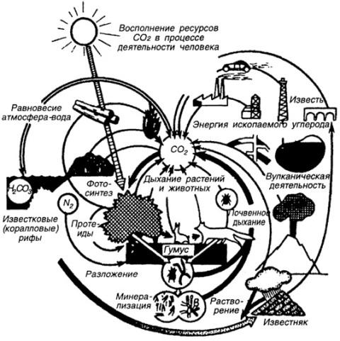 Структура круговорота углерода