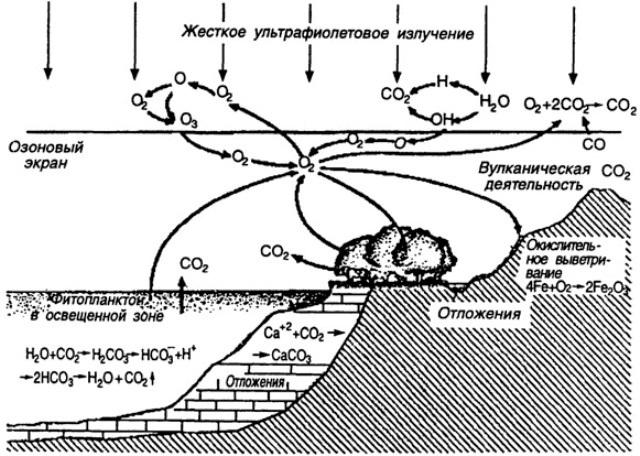 Структура круговорота