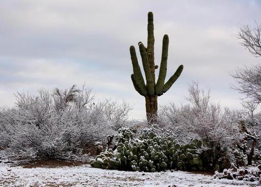 Растительный мир пустыни сонора